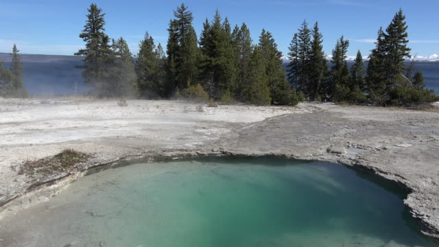 yellowstone ledge spring at west thumb - kieferngewächse stock-videos und b-roll-filmmaterial