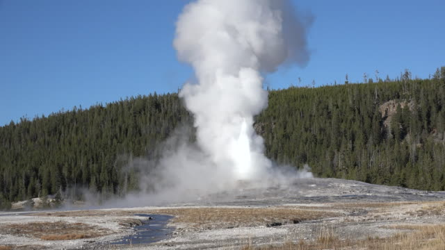 yellowstone old faithful eruption zoom out - geysir stock-videos und b-roll-filmmaterial