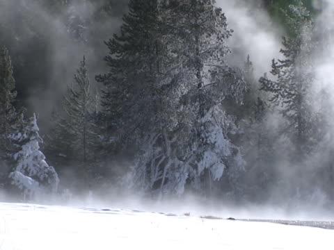 vídeos y material grabado en eventos de stock de yellowstone: snowy, wind-blown evergreens - artbeats