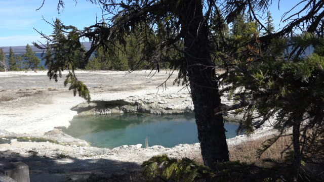 stockvideo's en b-roll-footage met yellowstone west thumb tree leans over hot pool - thermaalwater