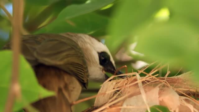 yellow ventilate bulbul alimentazione uccelli bambino - portello video stock e b–roll