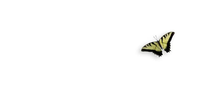 Yelow Schmetterling fliegt alpha