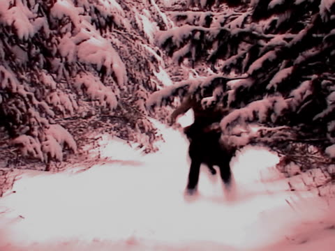 yeti guy - hunting sport stock videos and b-roll footage