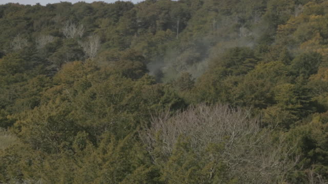yew trees pollinate in sussex - coniferous stock videos and b-roll footage