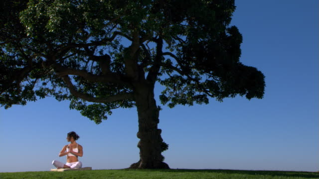 vídeos de stock, filmes e b-roll de yoga under a tree - self discipline