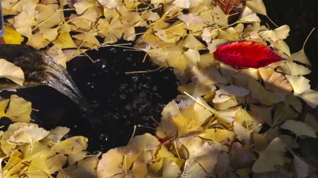 yogenji temple fountain - japan stock videos & royalty-free footage