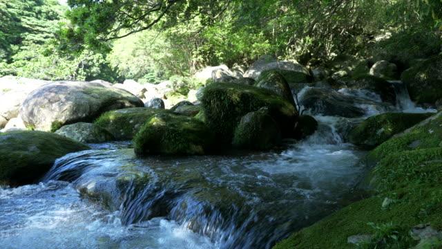 yoggo valley yakushima - 河川点の映像素材/bロール