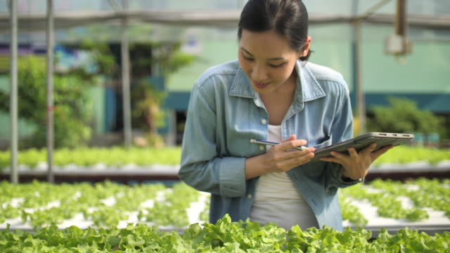 yong freelance farmer - agricultural activity stock videos & royalty-free footage
