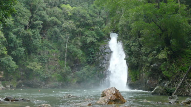 yong waterfall national park - wildlife tracking tag stock videos and b-roll footage