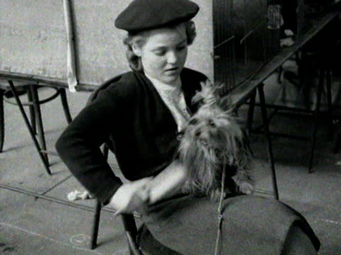 a yorkshire terrior barks as it's owner brushes his coat 1954 - pet owner stock videos & royalty-free footage