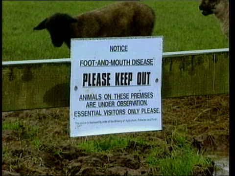 yorkshire york ext gv people along street in historic part of city gv gift shop lambs in field pull out sign for foot and mouth disease road workers... - war in afghanistan: 2001 present stock-videos und b-roll-filmmaterial