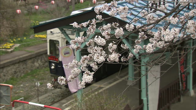 yoshino cherry blossoms frame the platform at bessho onsen station in japan. - nagano prefecture stock videos and b-roll footage