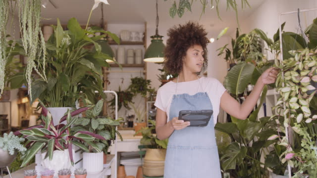 young adult afro american female small business owner working on digital tablet in store checking inventory - botany stock videos & royalty-free footage