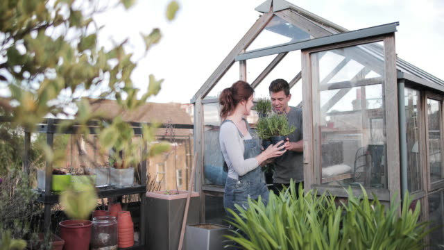 young adult couple gardening together - shed stock videos & royalty-free footage
