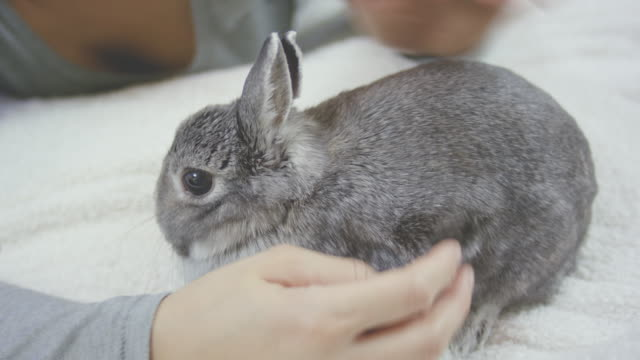 young adult female cuddling and being affectionate with her pet rabbit - pets stock videos & royalty-free footage