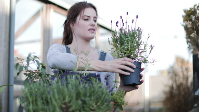 young adult female smelling lavender - in den dreißigern stock-videos und b-roll-filmmaterial