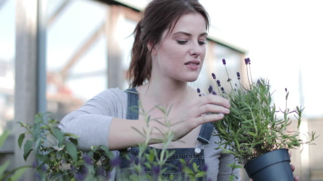 young adult female smelling lavender - shack stock videos & royalty-free footage