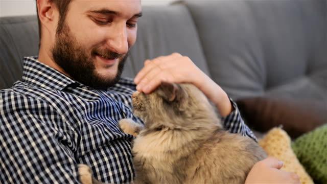 vidéos et rushes de jeune adulte homme fondles et détend cat. gros plan - vidéo portrait