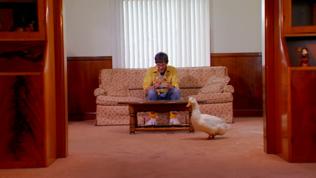young adult man sitting on a couch and a goose walks in - bizarre stock videos & royalty-free footage