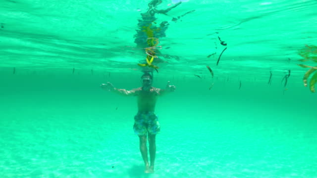 young adult man snorkeling on tropical vacations - sea grass plant stock videos & royalty-free footage