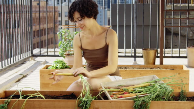 Young Adult Woman Picking Carrots on Roof Garden