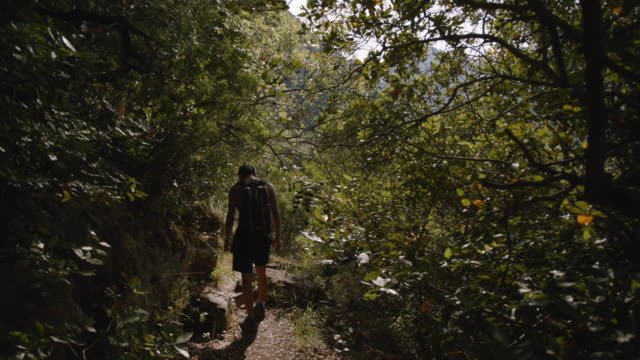 young adults hike in forest - olympos, turkey - nackter oberkörper stock-videos und b-roll-filmmaterial