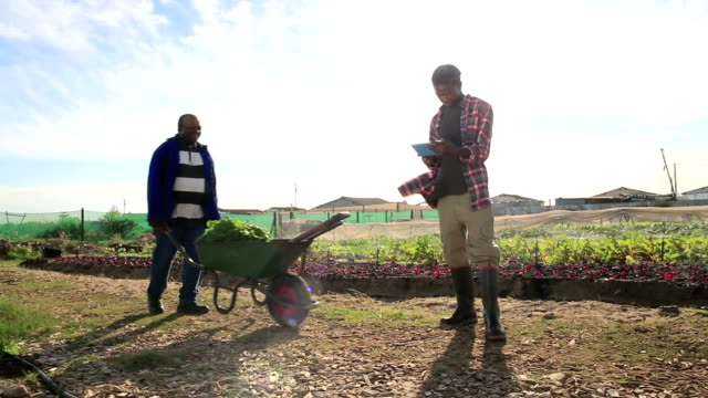 young african organic farmer using new technology - wheelbarrow stock videos and b-roll footage