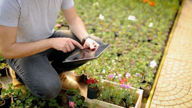 vídeos y material grabado en eventos de stock de joven experto agrícola en invernadero - oficio agrícola