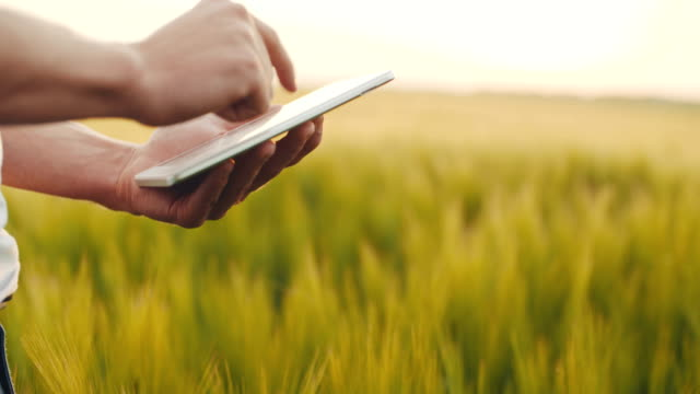 Young Agriculturalist Using Digital Tablet In Agricultural Field