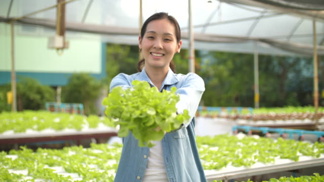 young asian farmer girl holding basket and collecting vegetables in hydroponic farm - aquatic plant stock videos & royalty-free footage