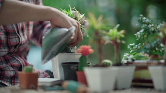 young asian man planting planting flowers in the yard - decor stock videos & royalty-free footage