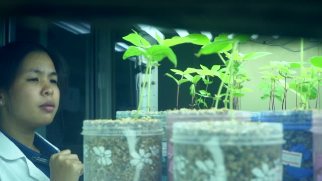 young asian scientist check the organic vegetable - plant stem stock videos & royalty-free footage