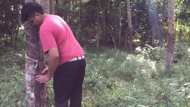 vídeos de stock, filmes e b-roll de jovem asiático tailandês seringueiro despeje o balde na plantação de árvores de borracha látex de borracha - látex borracha