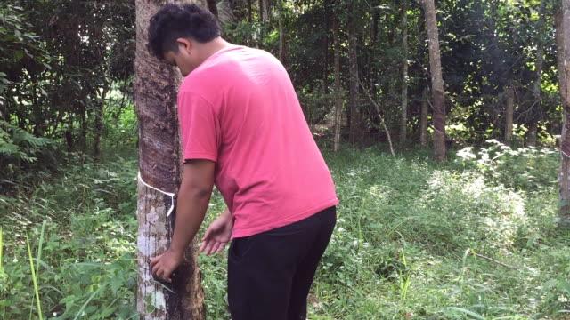 若いアジアのタイのゴム製タッパー ゴム製木のプランテーションでバケツにラテックスゴムを注ぐ - ラテックス点の映像素材/bロール