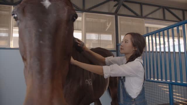 若いアジアの女性は、馬小屋で彼女の暗い茶色の種馬をブラッシングし、掃除 - 厩舎点の映像素材/bロール