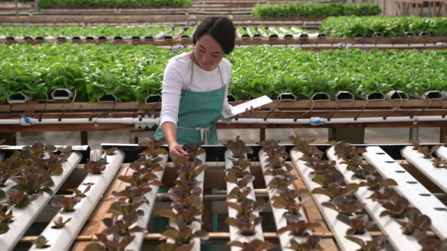 ms young asian woman checking on plants with a digital tablet. - scientist stock videos and b-roll footage