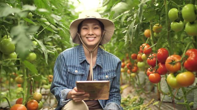 vídeos y material grabado en eventos de stock de joven asiática agricultor de pie en el invernadero y mirando a la cámara con confianza - empresa de carácter social