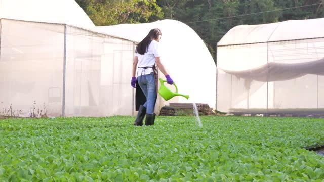 温室で植物を歩いたり散水する若いアジアの女性農家。 - フローリスト点の映像素材/bロール