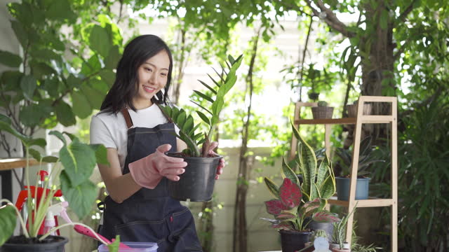 young asian woman planting and gardening indoors at home - digging stock videos & royalty-free footage