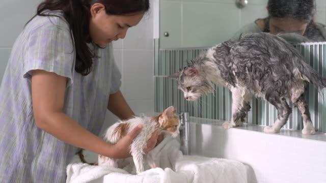 stockvideo's en b-roll-footage met jonge aziatische vrouw die de kat na het bad in de badkamers afveegt - in een handdoek gewikkeld