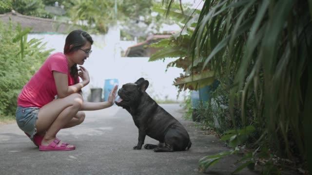 vídeos de stock, filmes e b-roll de jovem mulher asiática com brincalhão bulldog francês. conceito: formação, animal de estimação. - young animal