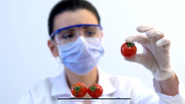 vídeos de stock e filmes b-roll de 4k young attractive female scientist researching in laboratory - modificação genética