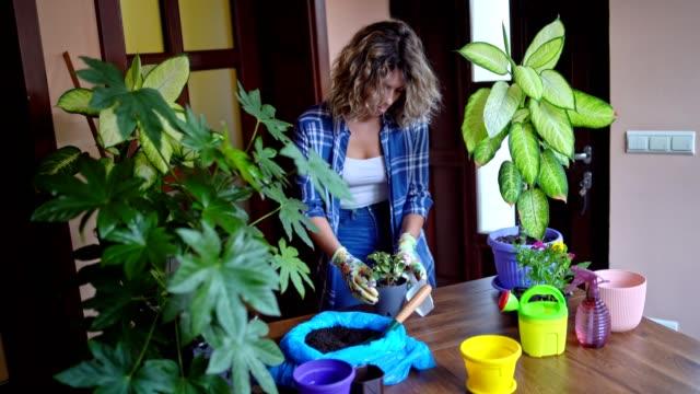 junge attraktive frau pflanzt blume zu hause - gartenhandschuh stock-videos und b-roll-filmmaterial