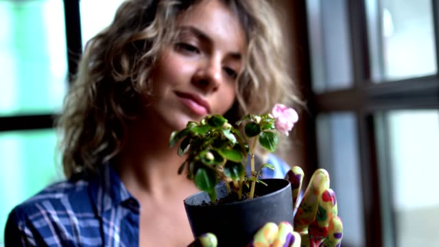 junge attraktive frau kümmert sich um ihre heimischen pflanzen - gartenhandschuh stock-videos und b-roll-filmmaterial