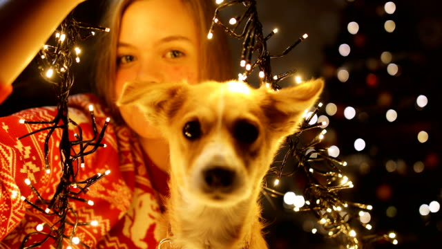 young beautiful girl enjoying with her dog in a cozy christmas atmosphere. playing with dog on a new year's eve - adoption stock videos & royalty-free footage