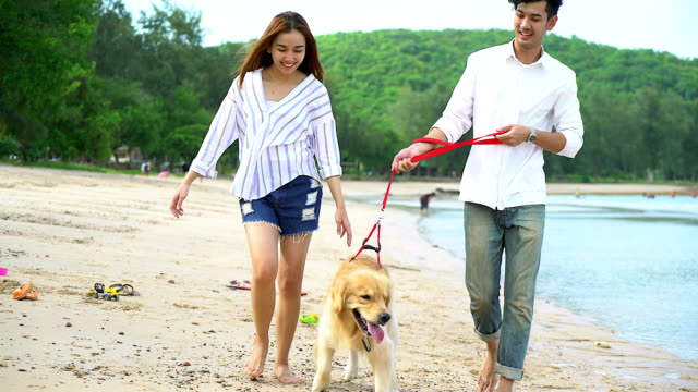 young beautiful loving couple playing with their dog at the seaside. - canine stock videos & royalty-free footage