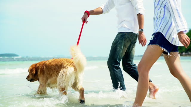 young beautiful loving couple playing with their dog at the seaside. - blue dog stock videos & royalty-free footage