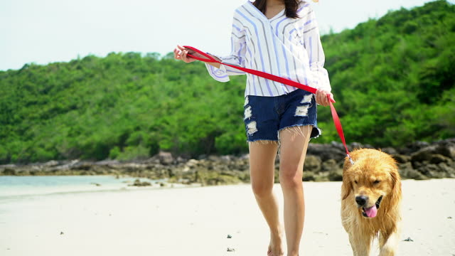 young beautiful woman walking with their dog at the seaside. - blue dog stock videos & royalty-free footage