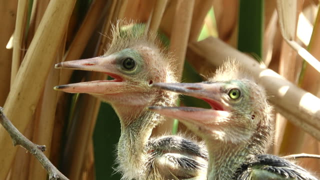 young bird head - animal nest stock videos & royalty-free footage