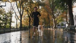 Young black man running with his white labrador dog through the city park during beautiful autumn morning, slow motion